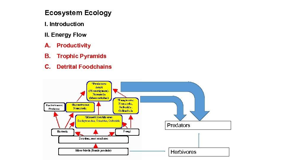 Ecosystem Ecology I. Introduction II. Energy Flow A. Productivity B. Trophic Pyramids C. Detrital