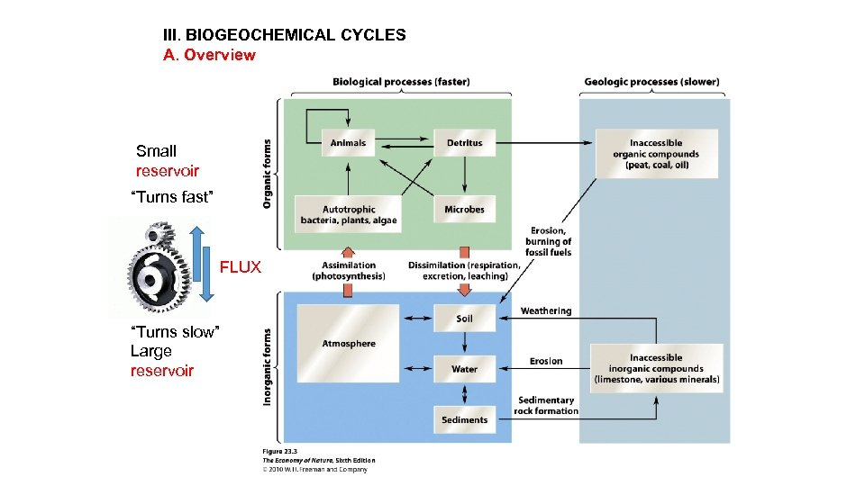 """III. BIOGEOCHEMICAL CYCLES A. Overview Small reservoir """"Turns fast"""" FLUX """"Turns slow"""" Large reservoir"""