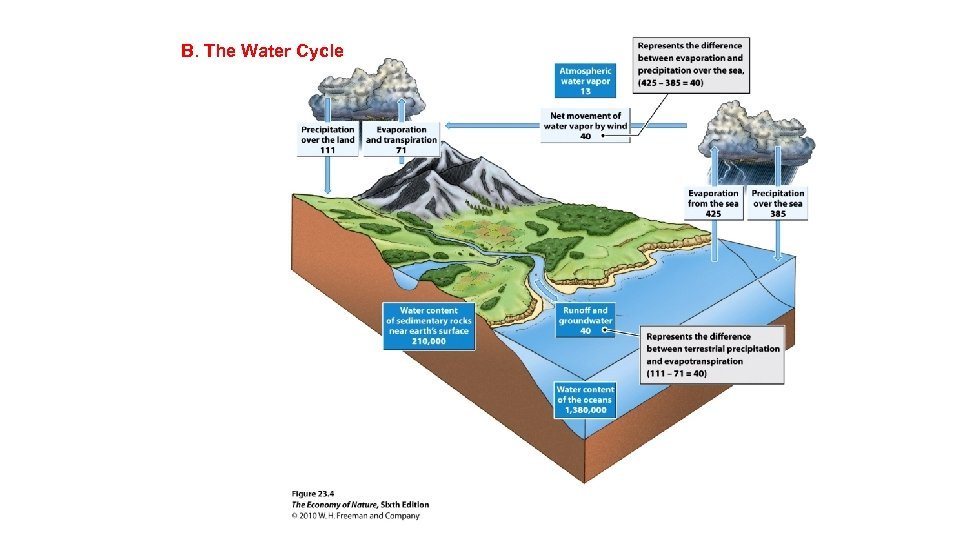 B. The Water Cycle