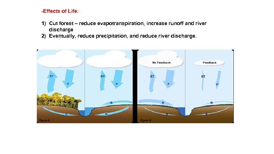 -Effects of Life: 1) Cut forest – reduce evapotranspiration, increase runoff and river discharge