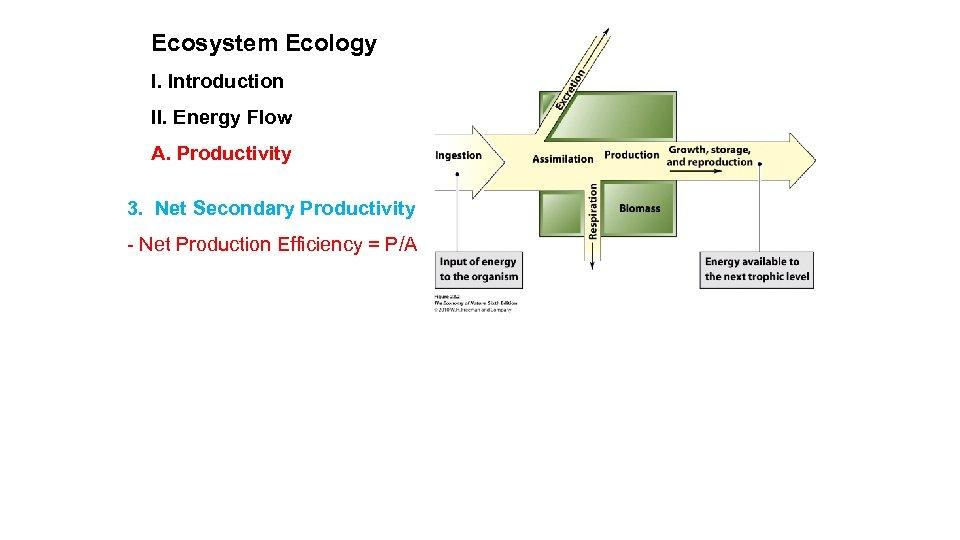 Ecosystem Ecology I. Introduction II. Energy Flow A. Productivity 3. Net Secondary Productivity -