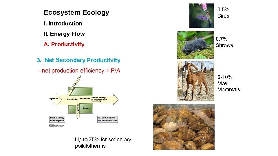 Ecosystem Ecology 0. 5% Birds I. Introduction II. Energy Flow A. Productivity 0. 7%