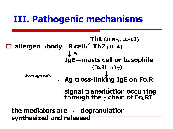 III. Pathogenic mechanisms Th 1 (IFN- , IL-12) o allergen→body→B cell← Th 2 (IL-4)