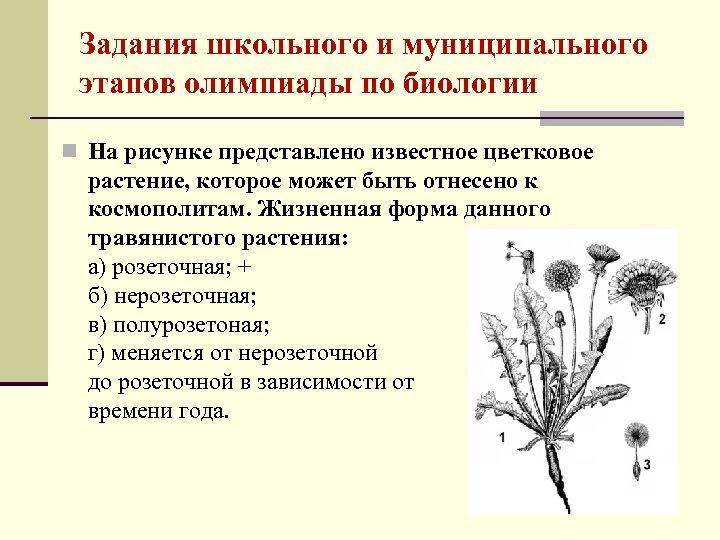 Задания школьного и муниципального этапов олимпиады по биологии n На рисунке представлено известное цветковое