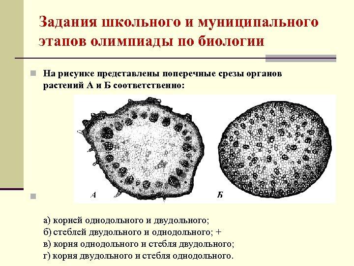 Задания школьного и муниципального этапов олимпиады по биологии n На рисунке представлены поперечные срезы