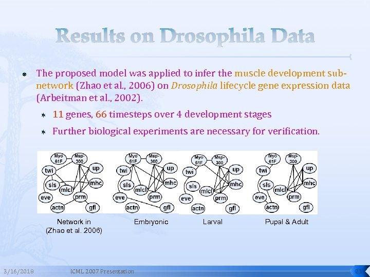 Results on Drosophila Data The proposed model was applied to infer the muscle development