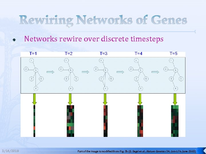 Rewiring Networks of Genes 3/16/2018 Networks rewire over discrete timesteps Part of the image