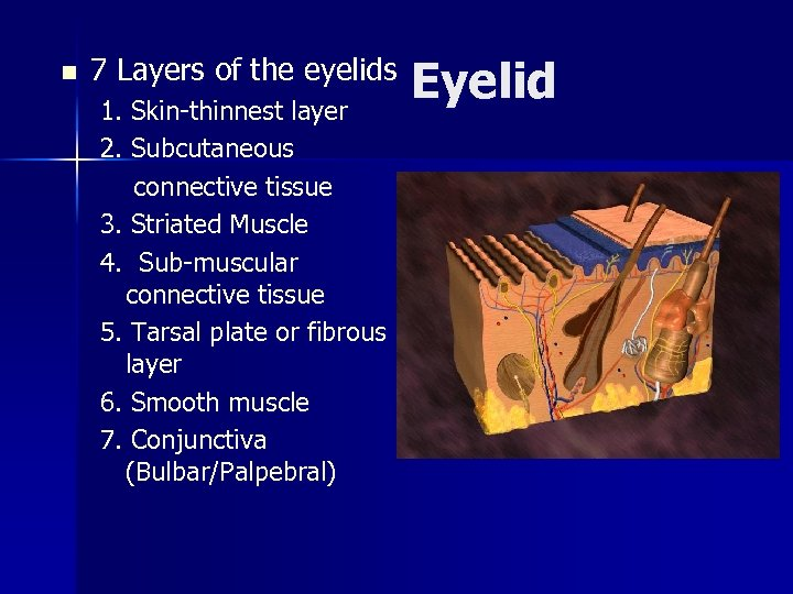 n 7 Layers of the eyelids 1. Skin-thinnest layer 2. Subcutaneous connective tissue 3.