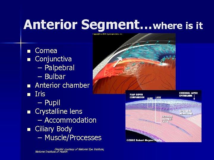 Anterior Segment…where is it n n n Cornea Conjunctiva – Palpebral – Bulbar Anterior