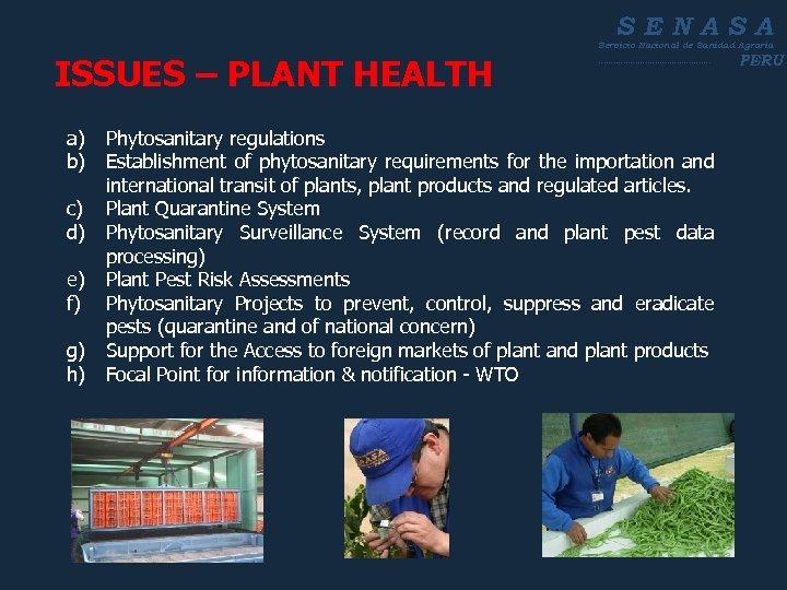 SENASA Servicio Nacional de Sanidad Agraria ISSUES – PLANT HEALTH ----------------------- a) Phytosanitary regulations