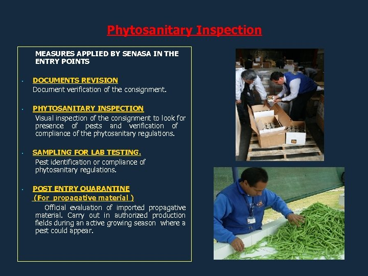 Phytosanitary Inspection MEASURES APPLIED BY SENASA IN THE ENTRY POINTS DOCUMENTS REVISION Document verification