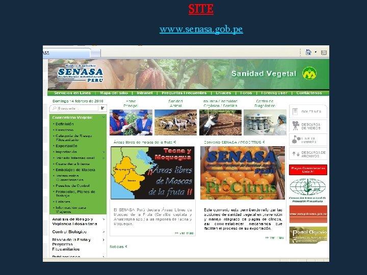 SITE www. senasa. gob. pe