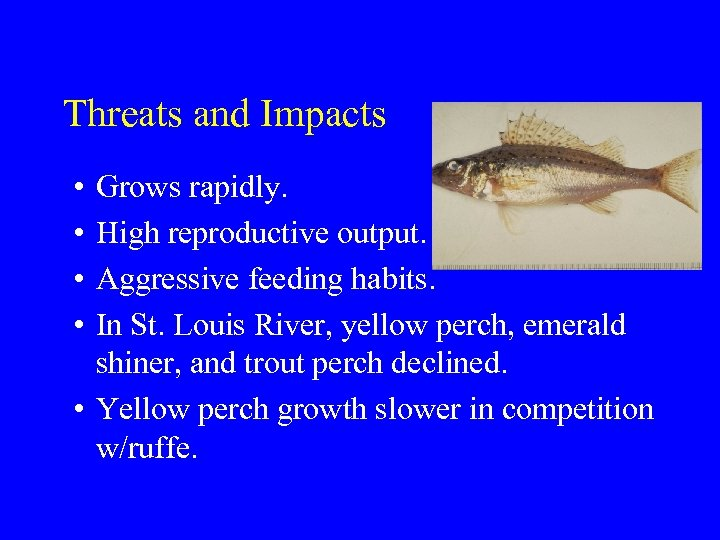 Threats and Impacts • • Grows rapidly. High reproductive output. Aggressive feeding habits. In