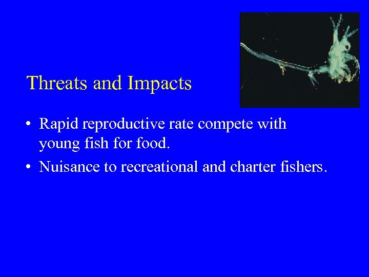 Threats and Impacts • Rapid reproductive rate compete with young fish for food. •