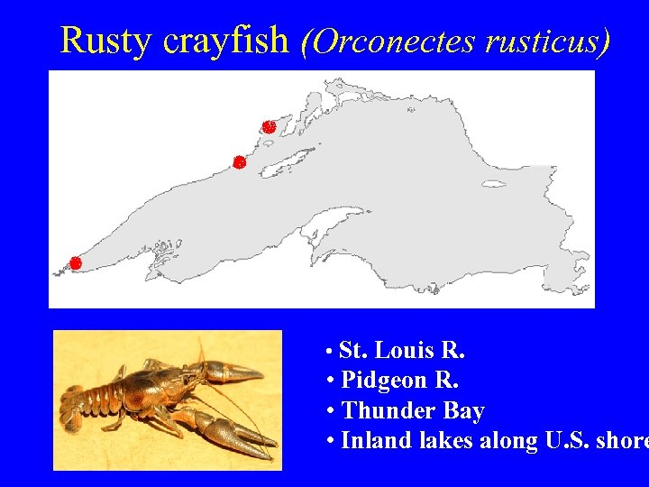 Rusty crayfish (Orconectes rusticus) • St. Louis R. • Pidgeon R. • Thunder Bay