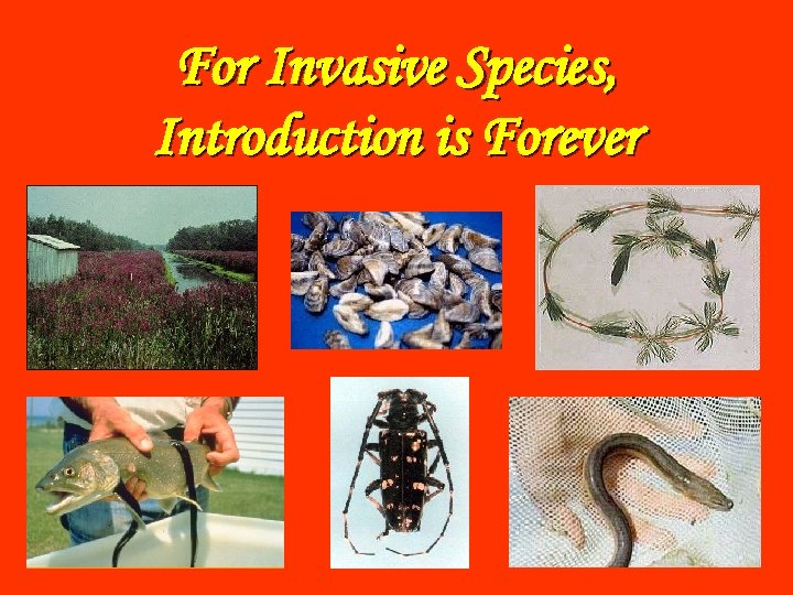 For Invasive Species, Introduction is Forever