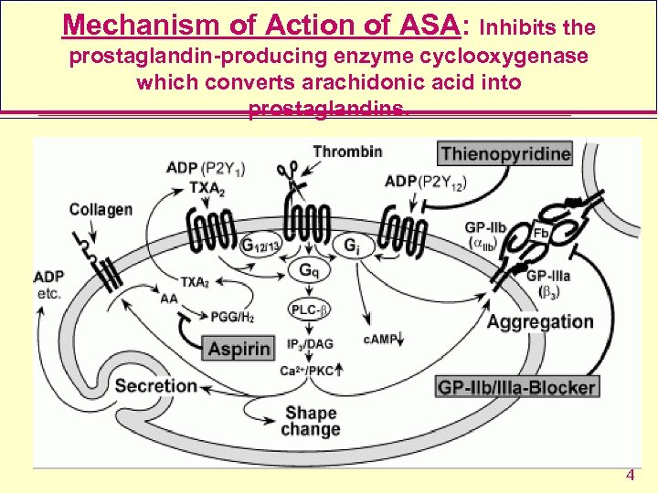 Mechanism of Action of ASA: Inhibits the prostaglandin-producing enzyme cyclooxygenase which converts arachidonic acid