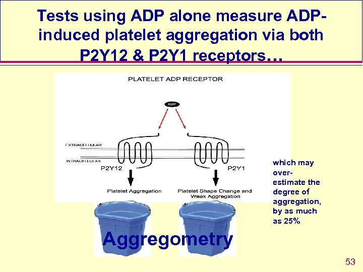 Tests using ADP alone measure ADPinduced platelet aggregation via both P 2 Y 12