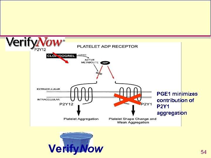 PGE 1 minimizes contribution of P 2 Y 1 aggregation Verify. Now 54