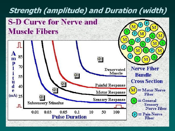 Strength (amplitude) and Duration (width)