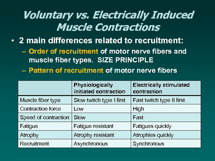 Voluntary vs. Electrically Induced Muscle Contractions • 2 main differences related to recruitment: –
