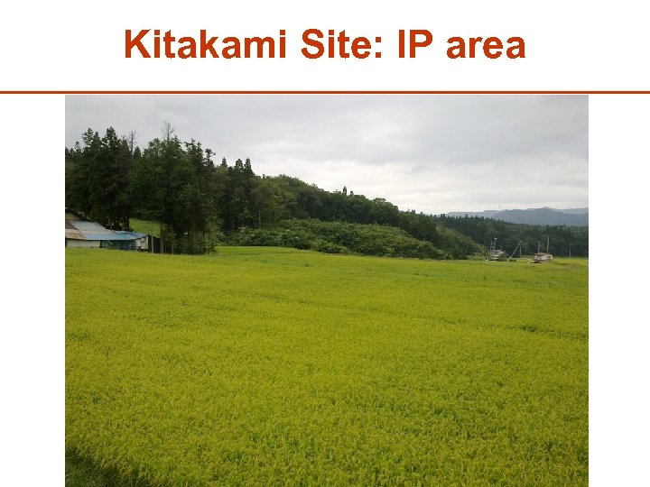 Kitakami Site: IP area 29
