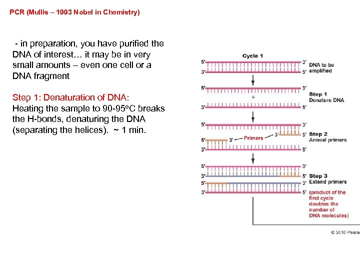 PCR (Mullis – 1993 Nobel in Chemistry) - in preparation, you have purified the
