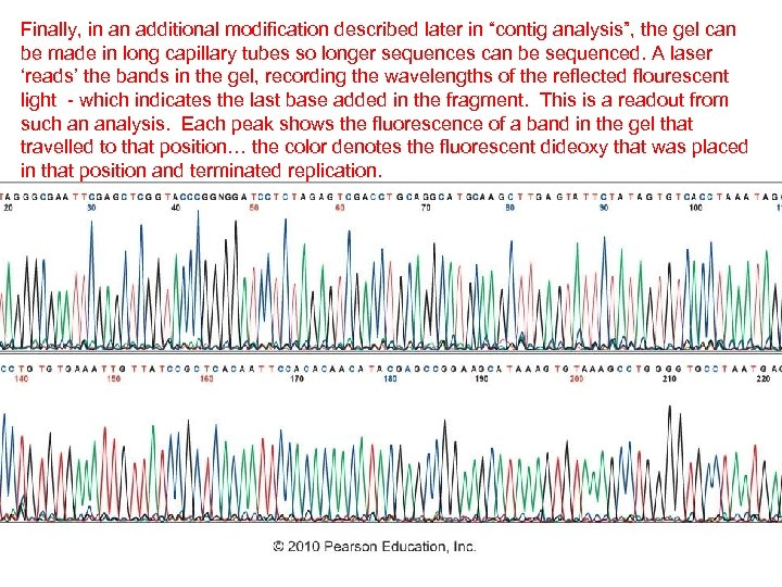 """Finally, in an additional modification described later in """"contig analysis"""", the gel can be"""