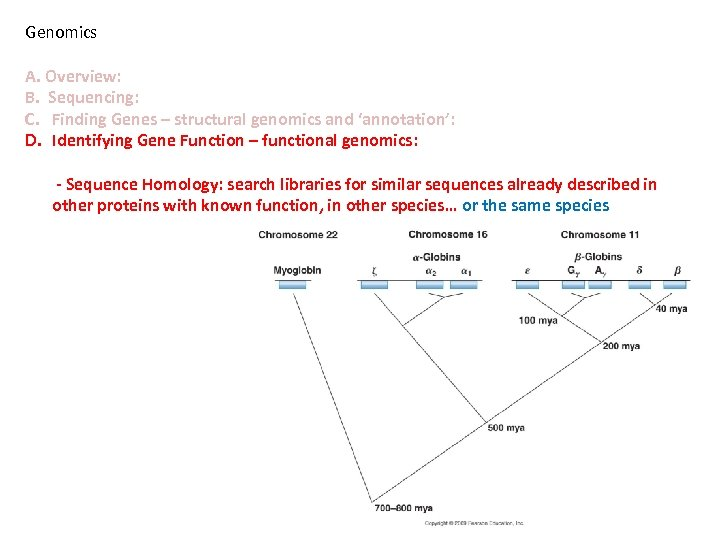 Genomics A. Overview: B. Sequencing: C. Finding Genes – structural genomics and 'annotation': D.