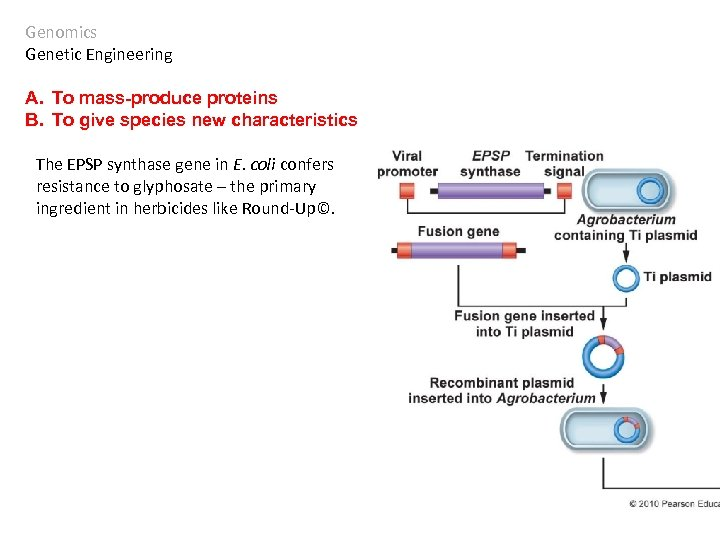Genomics Genetic Engineering A. To mass-produce proteins B. To give species new characteristics The