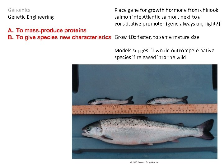Genomics Genetic Engineering Place gene for growth hormone from chinook salmon into Atlantic salmon,