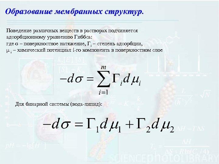 Образование мембранных структур. Поведение различных веществ в растворах подчиняется адсорбционному уравнению Гиббса: где σ