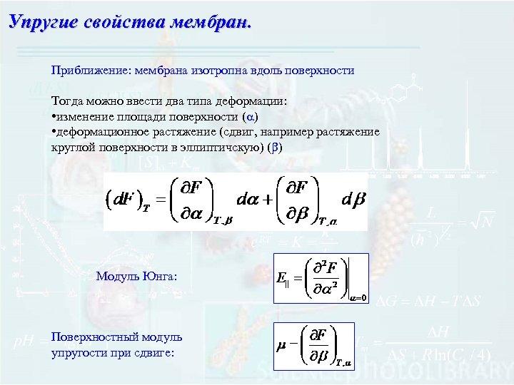 Упругие свойства мембран. Приближение: мембрана изотропна вдоль поверхности Тогда можно ввести два типа деформации: