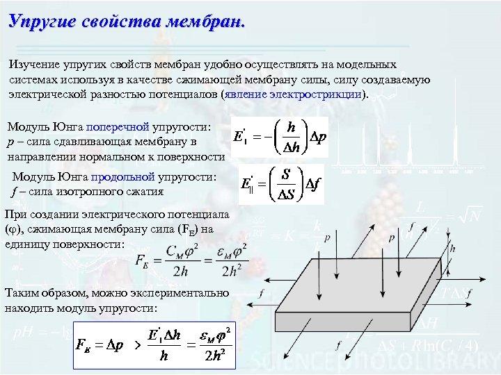 Упругие свойства мембран. Изучение упругих свойств мембран удобно осуществлять на модельных системах используя в