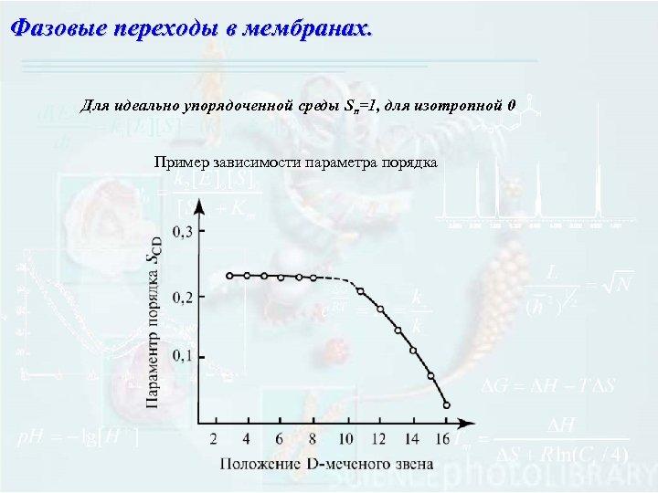 Фазовые переходы в мембранах. Для идеально упорядоченной среды Sn=1, для изотропной 0 Пример зависимости