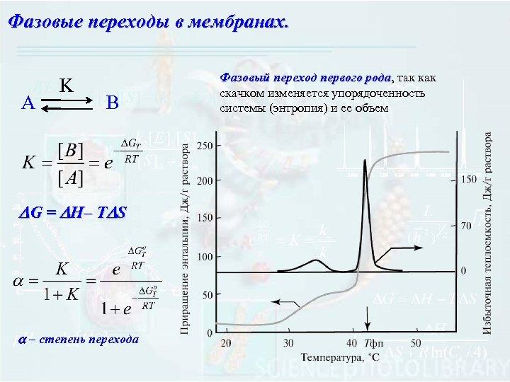 Фазовые переходы в мембранах. А K B DG = DH– TDS a – степень