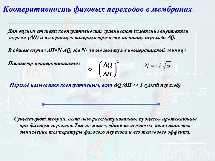 Кооперативность фазовых переходов в мембранах. Для оценки степени кооперативности сравнивают изменение внутренней энергии (DH)