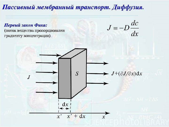 Пассивный мембранный транспорт. Диффузия. Первый закон Фика: (поток вещества пропорционален градиенту концентрации)