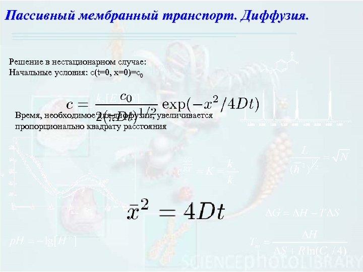 Пассивный мембранный транспорт. Диффузия. Решение в нестационарном случае: Начальные условия: с(t=0, x=0)=c 0 Время,