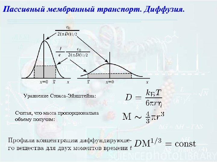 Пассивный мембранный транспорт. Диффузия. Уравнение Стокса-Эйнштейна: Считая, что масса пропорциональна объему получим: