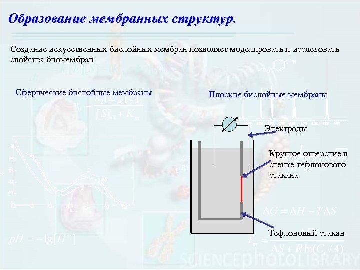 Образование мембранных структур. Создание искусственных бислойных мембран позволяет моделировать и исследовать свойства биомембран Сферические