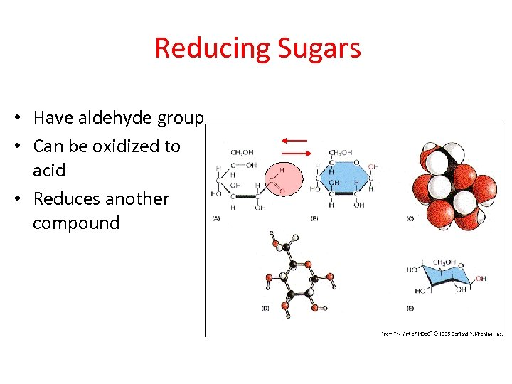Reducing Sugars • Have aldehyde group • Can be oxidized to acid • Reduces