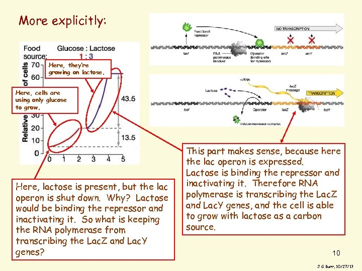 More explicitly: Here, they're growing on lactose. Here, cells are using only glucose to
