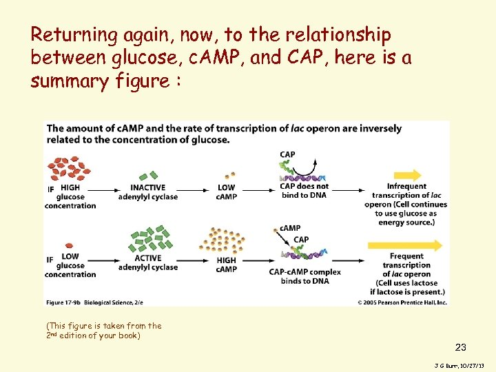 Returning again, now, to the relationship between glucose, c. AMP, and CAP, here is