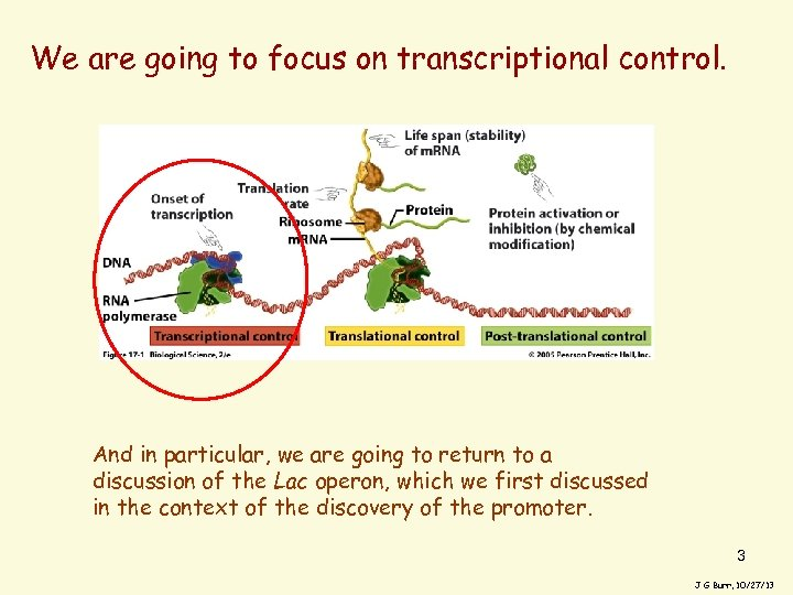 We are going to focus on transcriptional control. And in particular, we are going