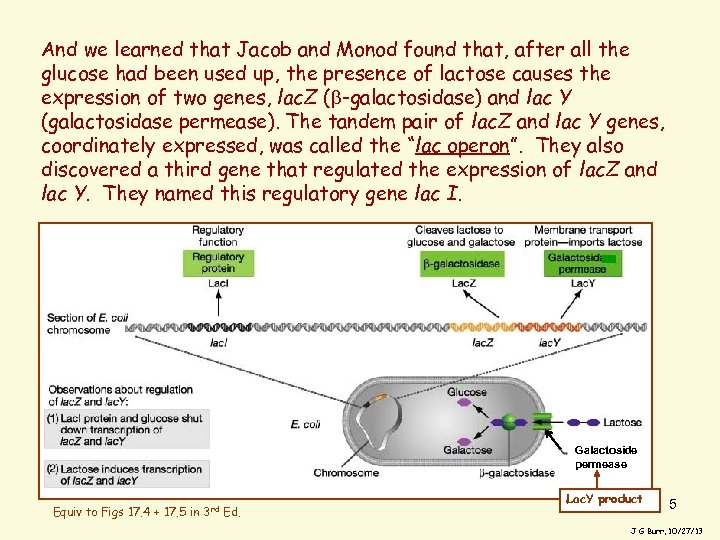 And we learned that Jacob and Monod found that, after all the glucose had