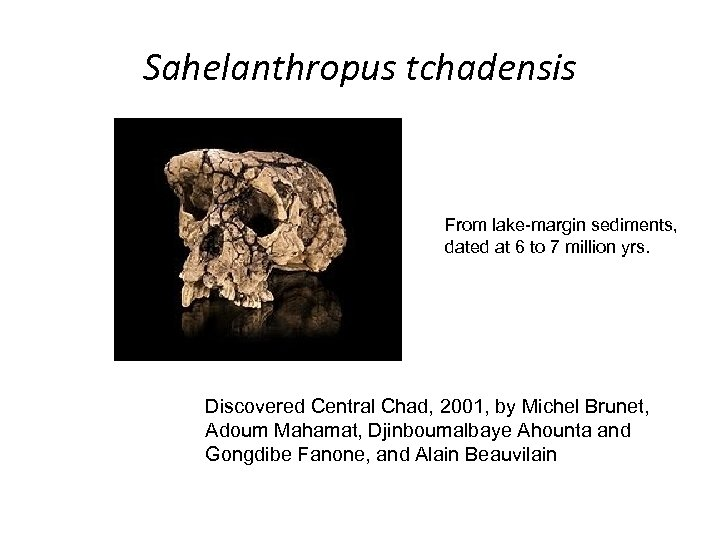 Sahelanthropus tchadensis From lake-margin sediments, dated at 6 to 7 million yrs. Discovered Central