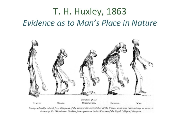 T. H. Huxley, 1863 Evidence as to Man's Place in Nature