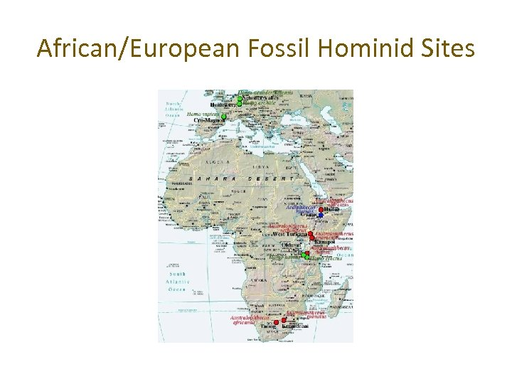 African/European Fossil Hominid Sites