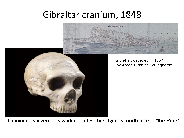 Gibraltar cranium, 1848 Gibraltar, depicted in 1567 by Antonis van der Wyngaerde Cranium discovered